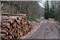 ST3993 : Log piles on the Usk Valley Walk by John Winder
