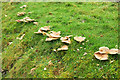 ST5467 : Fungi by Monarch's Way by Derek Harper
