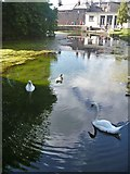ST5545 : Bishop's Palace, Wells [1] by Michael Dibb