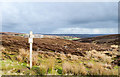 NZ6507 : Footpath signpost alongside minor road by Trevor Littlewood