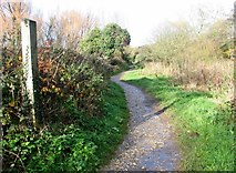 TG2105 : The main path on Marston Marsh by Evelyn Simak