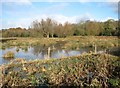 TG2105 : Marston Marsh partially flooded by Evelyn Simak