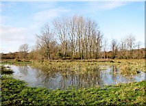 TG2105 : Flooded pasture on Marston Marsh by Evelyn Simak