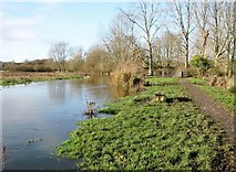 TG2105 : Path along the River Yare by Evelyn Simak