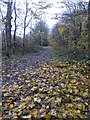 SK5333 : Late Autumn colour in the bridleway in Brandshill Wood by Graham Hogg