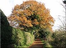 TG2105 : Autumn colours on Marston Lane by Evelyn Simak