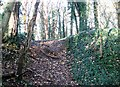 TG2105 : The edge of a disused pit in Danby Wood by Evelyn Simak