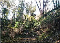 TG2105 : Fallen trees at the bottom of a disused pit in Danby Wood by Evelyn Simak