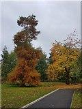 SE6250 : Autumnal colours on campus by DS Pugh