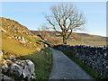 SD7075 : Descending Twisleton Lane near Twisleton Scar End by David Dixon