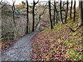 SD7074 : Ingleton Waterfalls Trail, Path in Quarry Wood by David Dixon