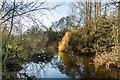 SJ5510 : River Tern by Ian Capper
