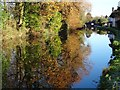 SO8171 : Trees reflected in the canal by Philip Halling