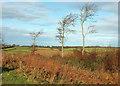 SS9733 : Trees on Blagdon Hill by Derek Harper