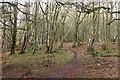 NT2338 : Path in Spoon Wood plantation by Jim Barton