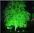 NT2475 : Green Tree at the Royal Botanic Garden by Jim Barton