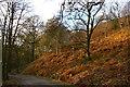 SJ9581 : Hase Bank Wood, Lyme Park by Christopher Hilton