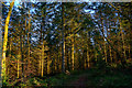 SS4922 : Great Torrington : White's Wood by Lewis Clarke