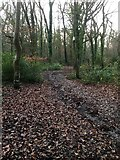 SX5857 : Path in Smuggler's Coppice, Sparkwell by jeff collins
