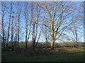 SP3276 : War Memorial Park trees by E Gammie