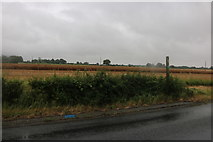 TM1759 : Fields by the A1120, Pettaugh by David Howard