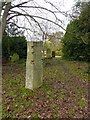TL4658 : Goldfinch, Mill Road Cemetery by Alan Murray-Rust