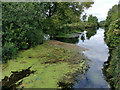 SU4827 : The Itchen Navigation, north of the site of St Catherine's Lock by Phil Champion