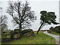 SE2553 : Leaning pine tree near Beckwithshaw by Stephen Craven