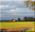 SJ7724 : Field with emerging crop... and standing water by Trevor Littlewood