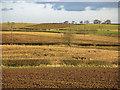 NZ3019 : Farmland south of East Ketton (2) by Mike Quinn