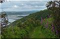 SN1349 : Descending the Pembrokeshire Coastal Path towards Poppit Sands by Mat Fascione