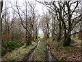 NS7643 : Wet woodland track near Bogside by Alan O'Dowd