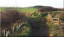 NU2422 : Coast path near Dunstan Steads by Derek Harper