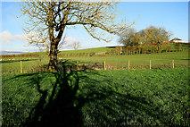 H5070 : Tree shadows, Donaghanie by Kenneth  Allen