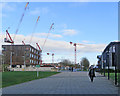 TL4258 : Cranes over the Cavendish III site by John Sutton