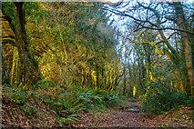 ST2213 : Churchstanton : Footpath by Lewis Clarke