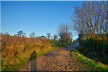 ST2214 : Otterford : Farm Track by Lewis Clarke