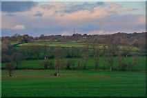ST2113 : Churchstanton : Countryside Scenery by Lewis Clarke