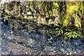 ST1685 : Coal seam at Wern Ddu by Alan Hughes
