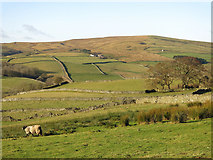 NY9539 : The lower Rookhope valley below Shepherd's House by Mike Quinn