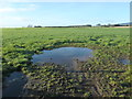 NX9656 : Puddle in a field north of East Preston by Christine Johnstone