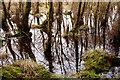 NH6953 : Bog woodland on Wood Hill by Julian Paren