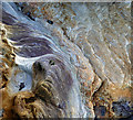 NT7871 : Rocks on the foreshore at Cove Bay by Walter Baxter