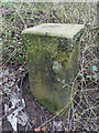 SJ3069 : Boundary Stone by Wepre Brook by John S Turner