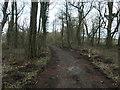 NX9355 : Path through the northern half of Mersehead plantation by Christine Johnstone