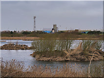 SD3346 : Seasonal Lagoon, Fleetwood Marsh Nature Reserve by David Dixon