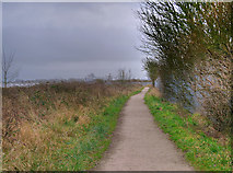 SD3444 : The Wyre Way near Thornton ICI by David Dixon