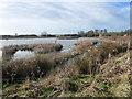 SJ3073 : Bridge Pool, RSPB Burton Mere Wetlands by Christine Johnstone
