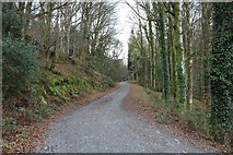 NX4564 : The Road to Bruntis Loch by Billy McCrorie