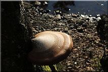 NX4465 : Fungi at Bruntis Loch by Billy McCrorie